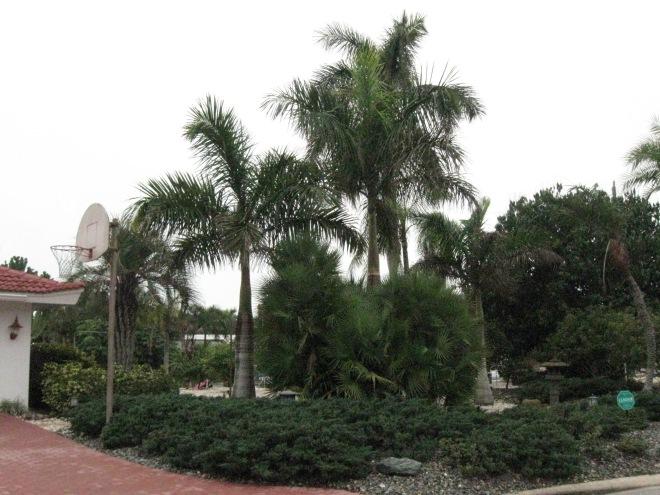 FL trees